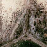 Aspergillus-mold